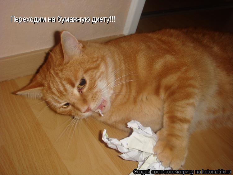 Котоматрица: Переходим на бумажную диету!!!