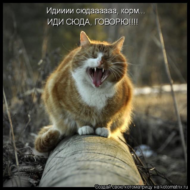 Котоматрица: Идииии сюдаааааа, корм... ИДИ СЮДА, ГОВОРЮ!!!!