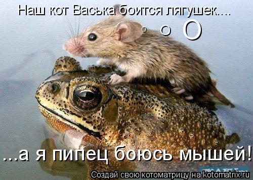 Котоматрица: Наш кот Васька боится лягушек.... О О О ...а я пипец боюсь мышей!!!