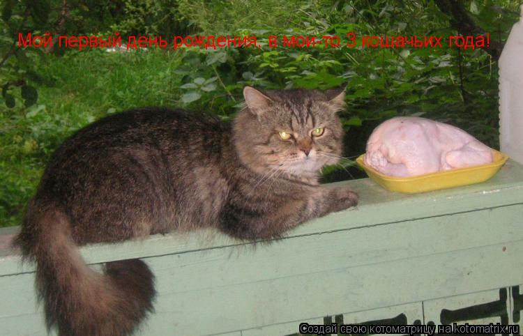 Котоматрица: Мой первый день рождения, в мои-то 3 кошачьих года!