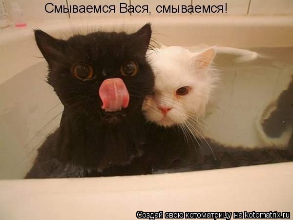 Котоматрица: Смываемся Вася, смываемся!