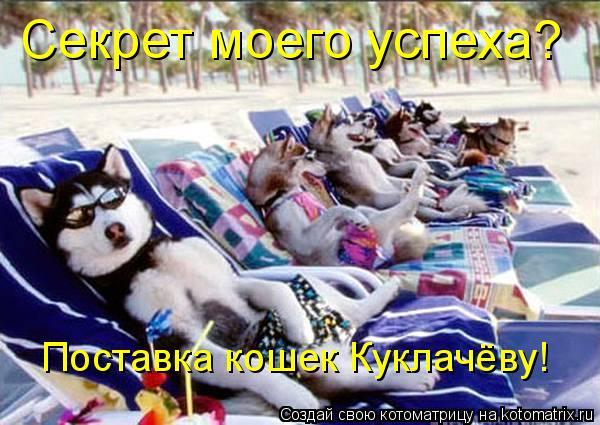 Котоматрица: Секрет моего успеха? Поставка кошек Куклачёву!