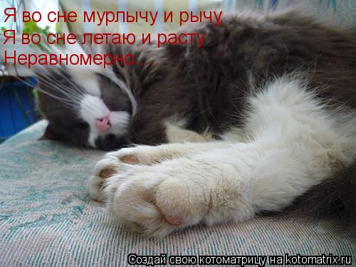 Котоматрица: Я во сне мурлычу и рычу, Я во сне летаю и расту Неравномерно.....