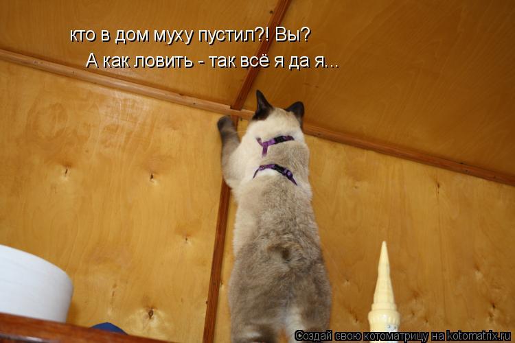 кошка ловит кого-то невидимого