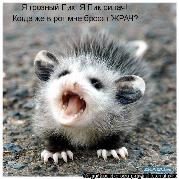 Котоматрица: Я-грозный Пик! Я Пик-силач! Когда же в рот мне бросят ЖРАЧ?