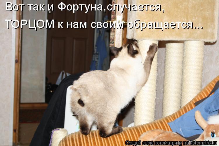 Котоматрица: Вот так и Фортуна,случается, ТОРЦОМ к нам своим обращается...
