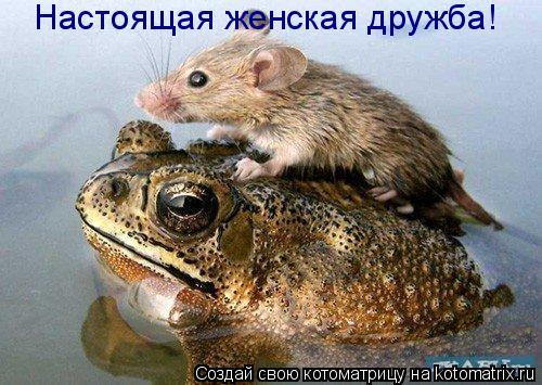 Котоматрица: Настоящая женская дружба!