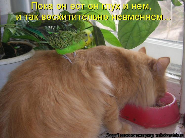 Котоматрица: Пока он ест он глух и нем, и так восхитительно невменяем...