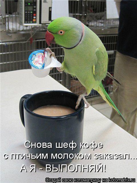 Котоматрица: Снова шеф кофе  с птичьим молоком заказал... А Я - ВЫПОЛНЯЙ!