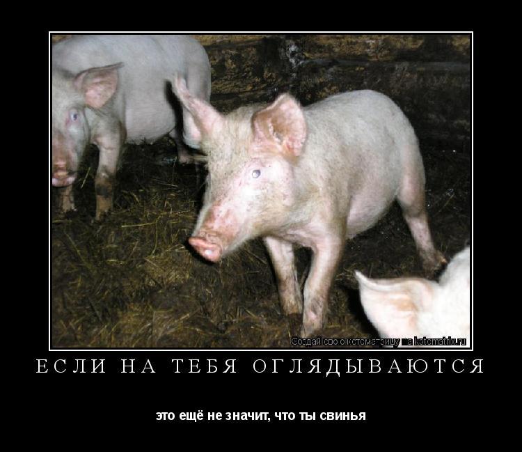Котоматрица: если на тебя оглядываются это ещё не значит, что ты свинья