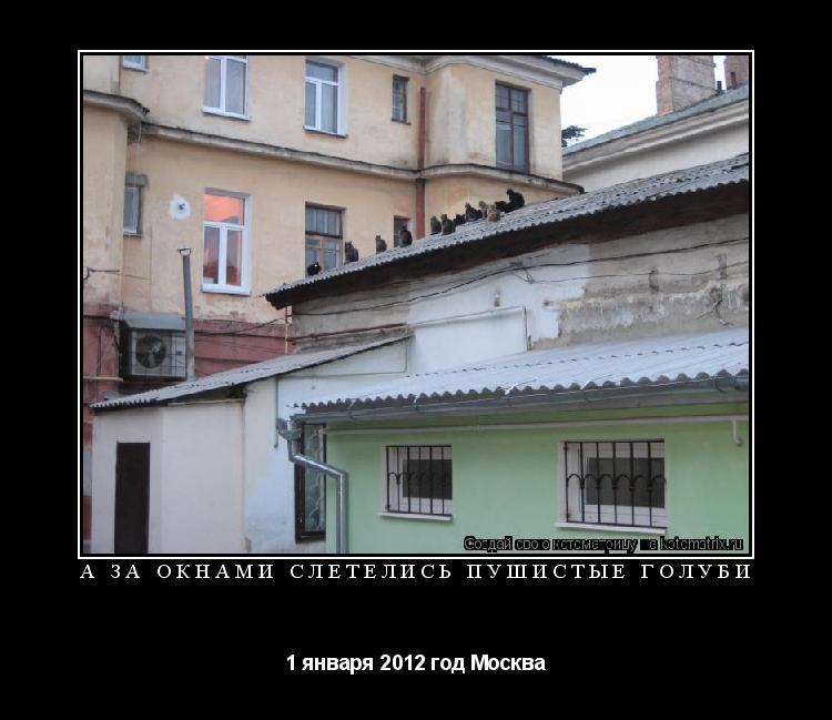Котоматрица: а за окнами слетелись пушистые голуби 1 января 2012 год Москва