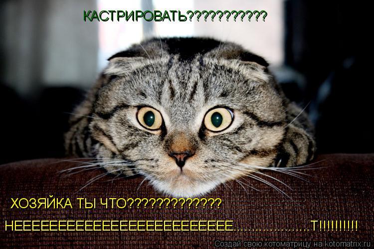 Котоматрица: КАСТРИРОВАТЬ??????????? ХОЗЯЙКА ТЫ ЧТО????????????? НЕЕЕЕЕЕЕЕЕЕЕЕЕЕЕЕЕЕЕЕЕЕЕЕЕ.....................Т!!!!!!!!!!