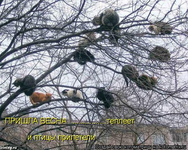 Котоматрица: ПРИШЛА ВЕСНА ................теплеет и птицы прилетели