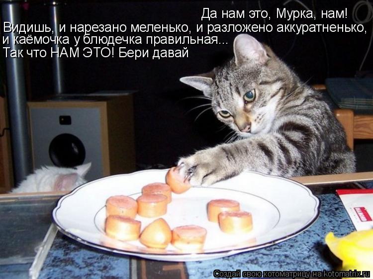 Котоматрица: Да нам это, Мурка, нам! Видишь, и нарезано меленько, и разложено аккуратненько, и каёмочка у блюдечка правильная... Так что НАМ ЭТО! Бери давай