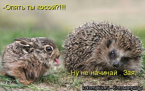 Котоматрица: -Опять ты косой?!!! -Ну не начинай , Зая...