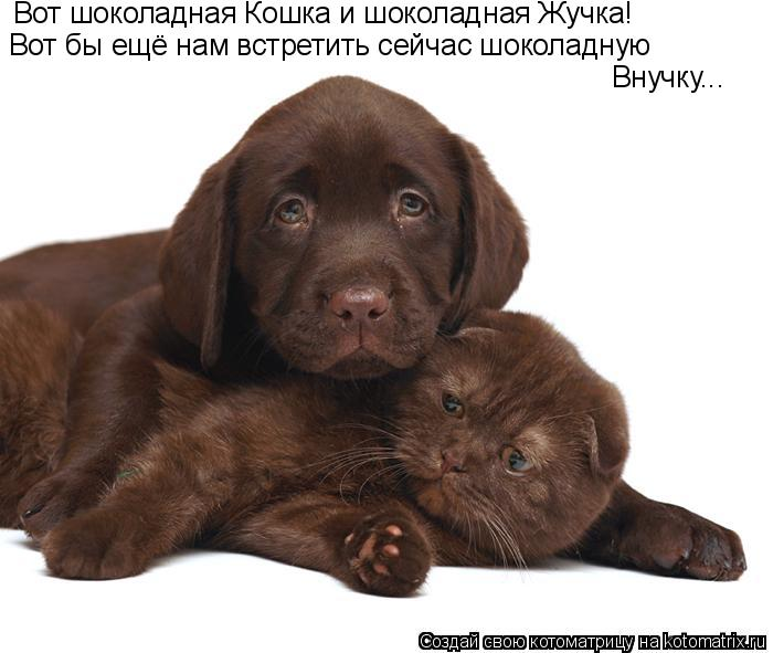 Котоматрица: Вот шоколадная Кошка и шоколадная Жучка! Вот бы ещё нам встретить сейчас шоколадную Внучку...