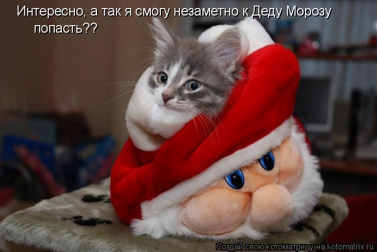Котоматрица: Интересно, а так я смогу незаметно к Деду Морозу попасть??
