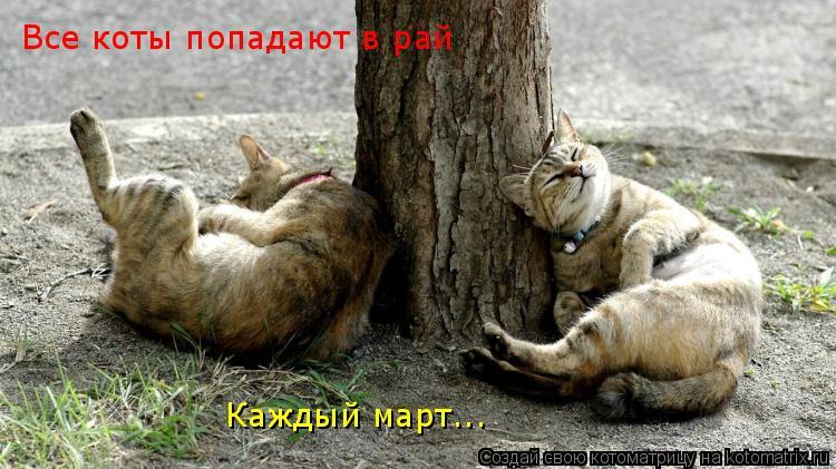 Котоматрица: Все коты попадают в рай Каждый март...