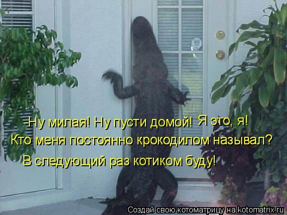 Котоматрица: -Ну милая! Ну пусти домой! Я это, я! Кто меня постоянно крокодилом называл? Кто меня постоянно крокодилом называл? В следующий раз котиком буд