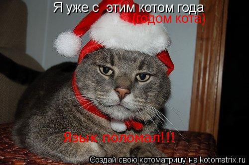 Котоматрица: Я уже с  этим котом года  Язык поломал!!! (годом кота)