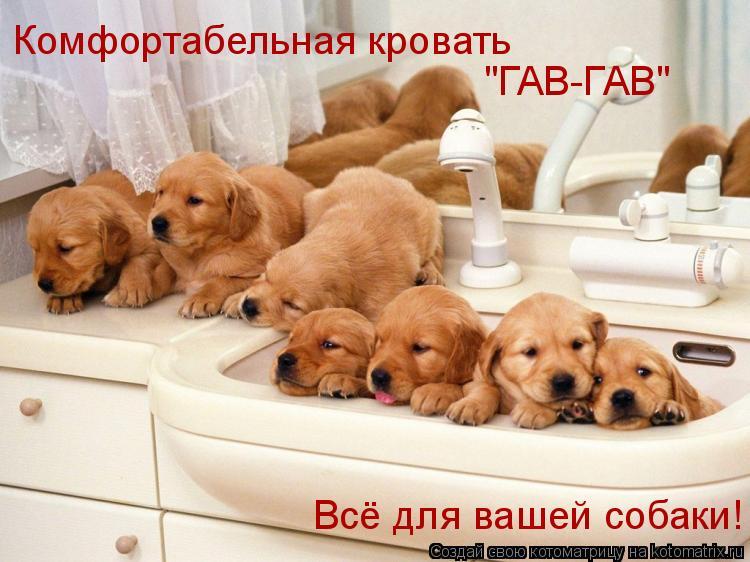"""Котоматрица: Комфортабельная кровать """"ГАВ-ГАВ"""" Всё для вашей собаки!"""