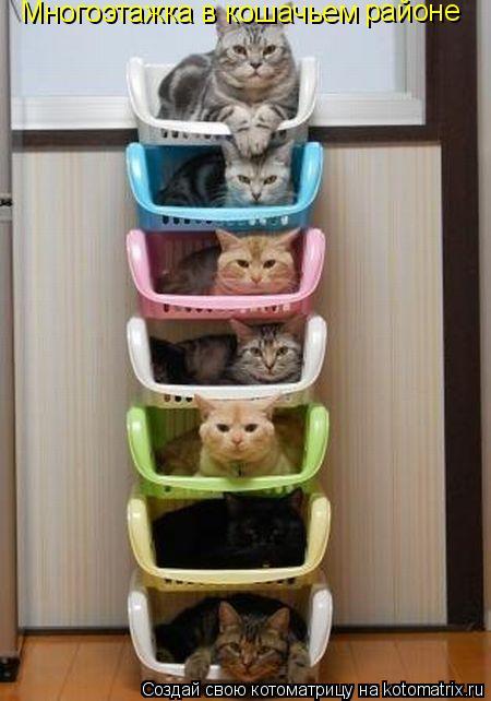 Котоматрица: Многоэтажка в кошачьем районе