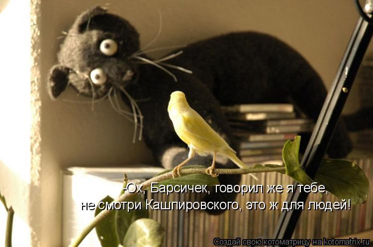 Котоматрица: -Ох, Барсичек, говорил же я тебе,  не смотри Кашпировского, это ж для людей!