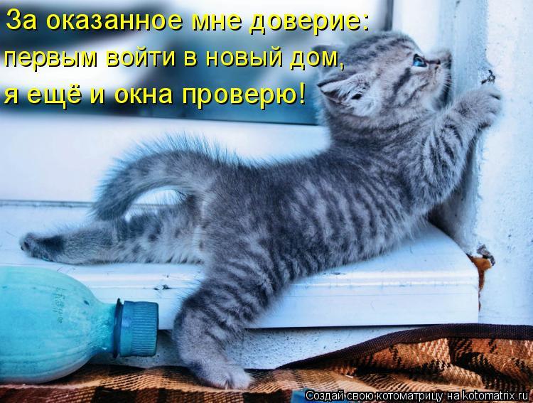 Котоматрица: За оказанное мне доверие: первым войти в новый дом, я ещё и окна проверю!