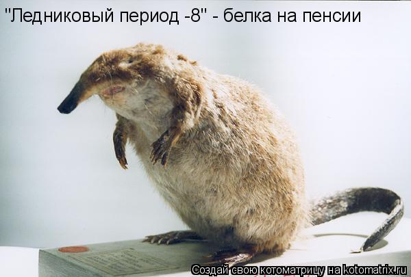"""Котоматрица: """"Ледниковый период -8"""" - белка на пенсии"""
