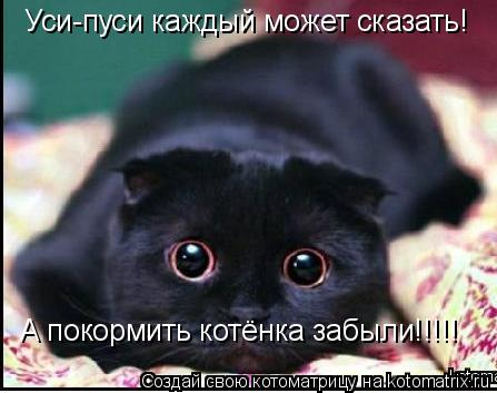Котоматрица: Уси-пуси каждый может сказать! А покормить котёнка забыли!!!!!