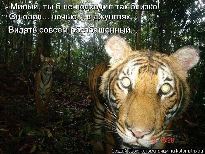 Котоматрица: - Милый, ты б не подходил так близко! Он один... ночью... в джунглях... Видать совсем обезбашенный...