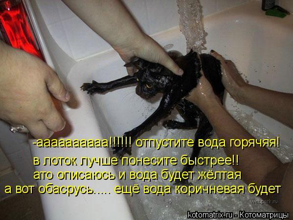 Котоматрица: -аааааааааа!!!!!! отпустите вода горячяя! в лоток лучше понесите быстрее!!  ато описаюсь и вода будет жёлтая а вот обасрусь..... ещё вода коричне