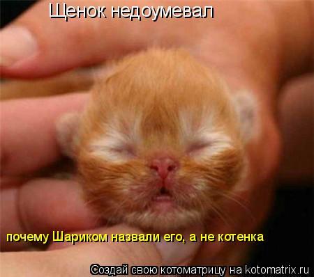 Котоматрица: Щенок недоумевал  почему Шариком назвали его, а не котенка