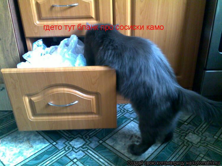 Котоматрица: гдето тут бланк про сосиски камо