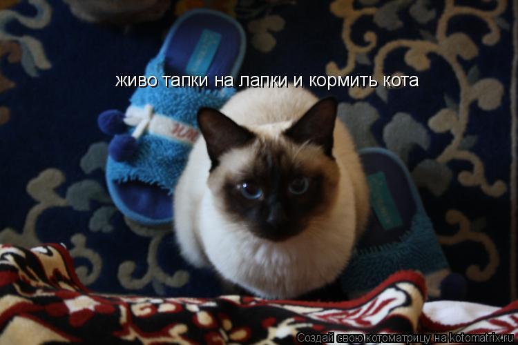 Котоматрица: живо тапки на лапки и кормить кота