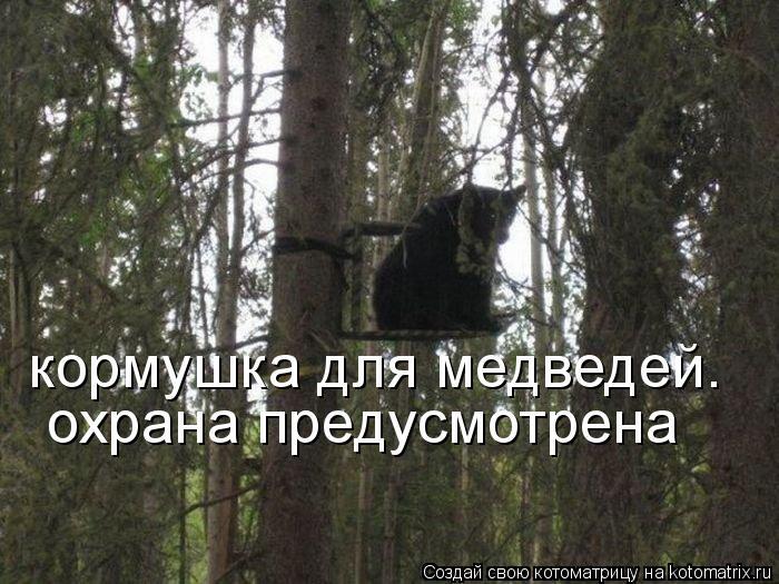 Котоматрица: кормушка для медведей.  охрана предусмотрена