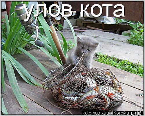 Котоматрица: улов кота