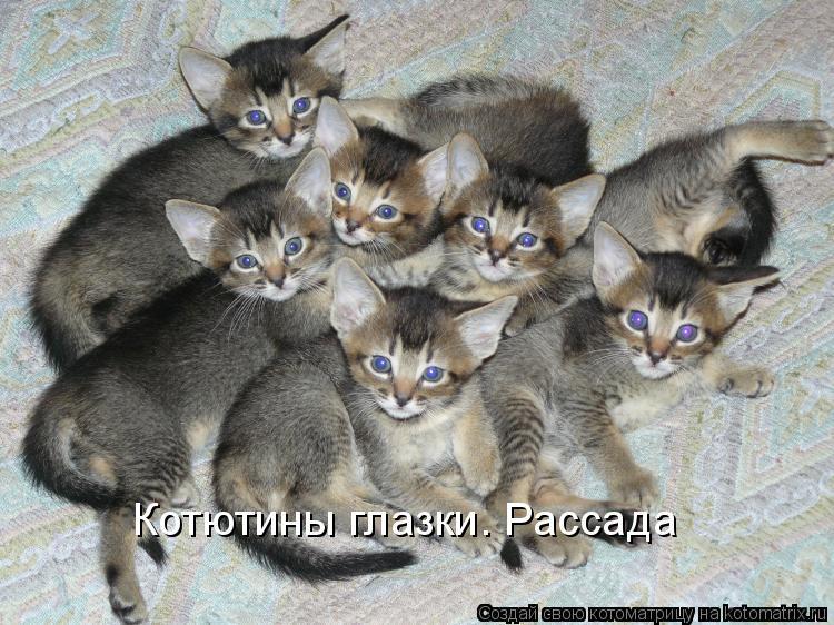 Котоматрица: Котютины глазки. Рассада