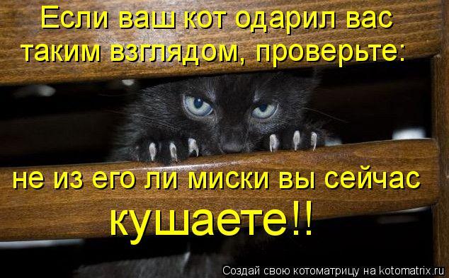 Котоматрица: Если ваш кот одарил вас таким взглядом, проверьте: не из его ли миски вы сейчас кушаете!!