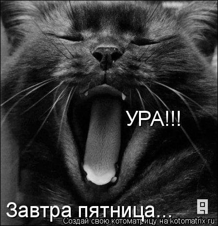 Почему не любят черных кошек (7 фото)