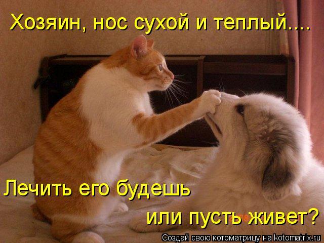 Котоматрица: Хозяин, нос сухой и теплый.... Лечить его будешь или пусть живет?
