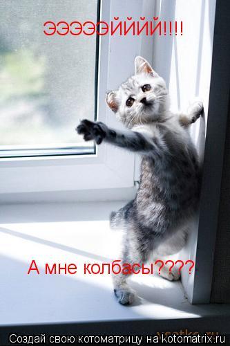Котоматрица: ЭЭЭЭЭЙЙЙЙ!!!! А мне колбасы????