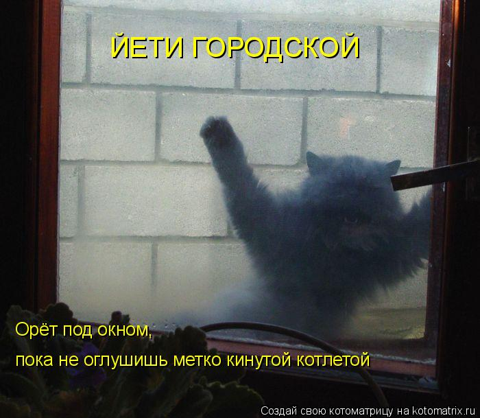 Котоматрица: ЙЕТИ ГОРОДСКОЙ Орёт под окном, пока не оглушишь метко кинутой котлетой