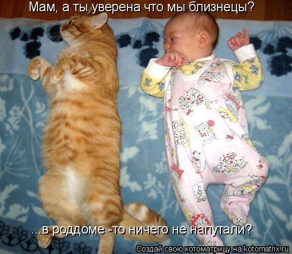 Котоматрица: Мам, а ты уверена что мы близнецы? ...в роддоме -то ничего не напутали?