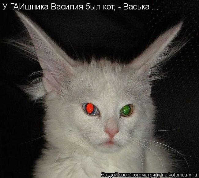 Котоматрица: У ГАИшника Василия был кот, - Васька ...