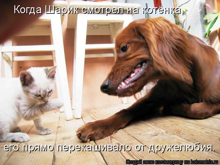 Котоматрица: Когда Шарик смотрел на котёнка, его прямо перекашивало от дружелюбия.