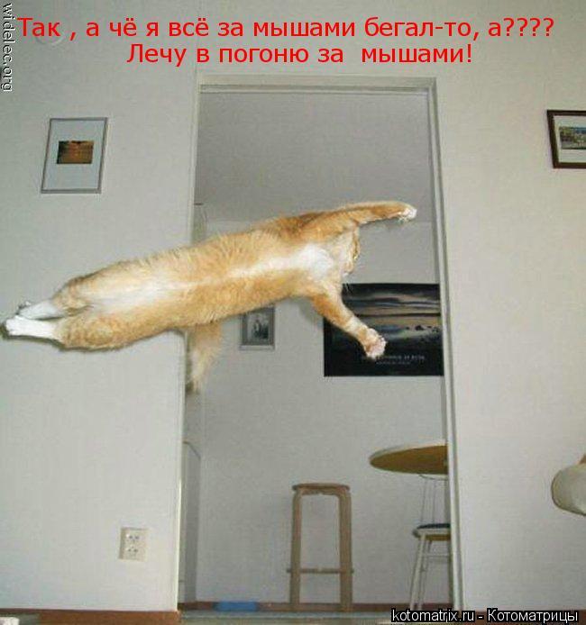 Котоматрица: Так , а чё я всё за мышами бегал-то, а???? Лечу в погоню за  мышами!