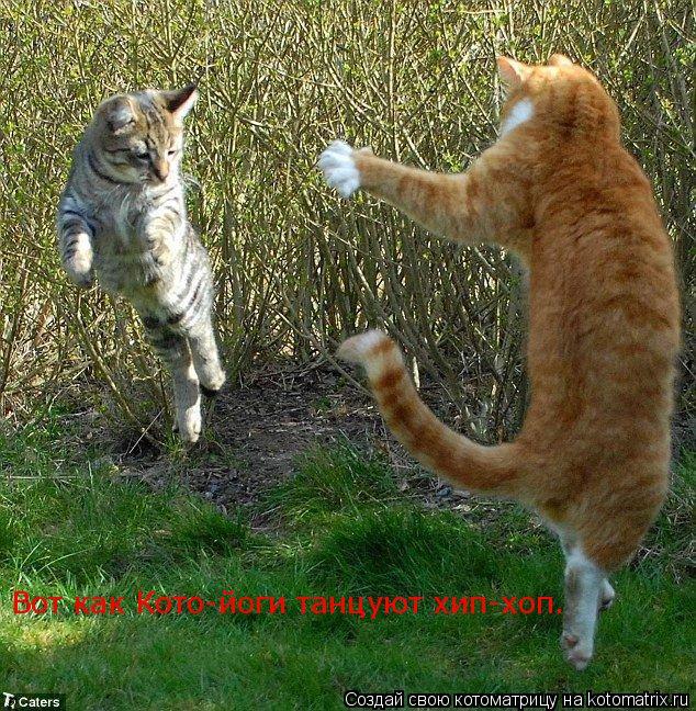 Котоматрица: Вот как Кото-йоги танцуют хип-хоп.