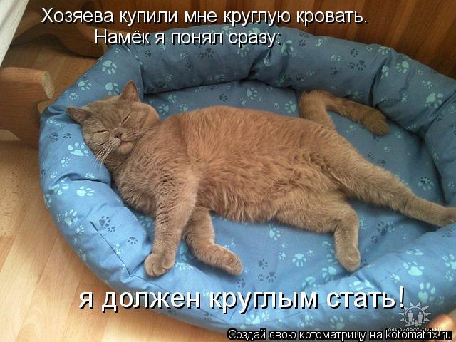 Котоматрица: Хозяева купили мне круглую кровать. Намёк я понял сразу:  я должен круглым стать!