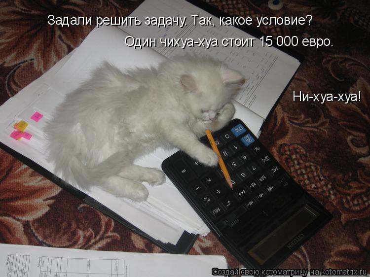 Котоматрица: Задали решить задачу. Так, какое условие? Один чихуа-хуа стоит 15 000 евро. Ни-хуа-хуа!
